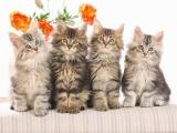 Клуб любителей кошек