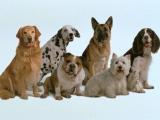 Любители собак